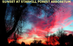 See many beautiful images of Starfill Forest Arboretum