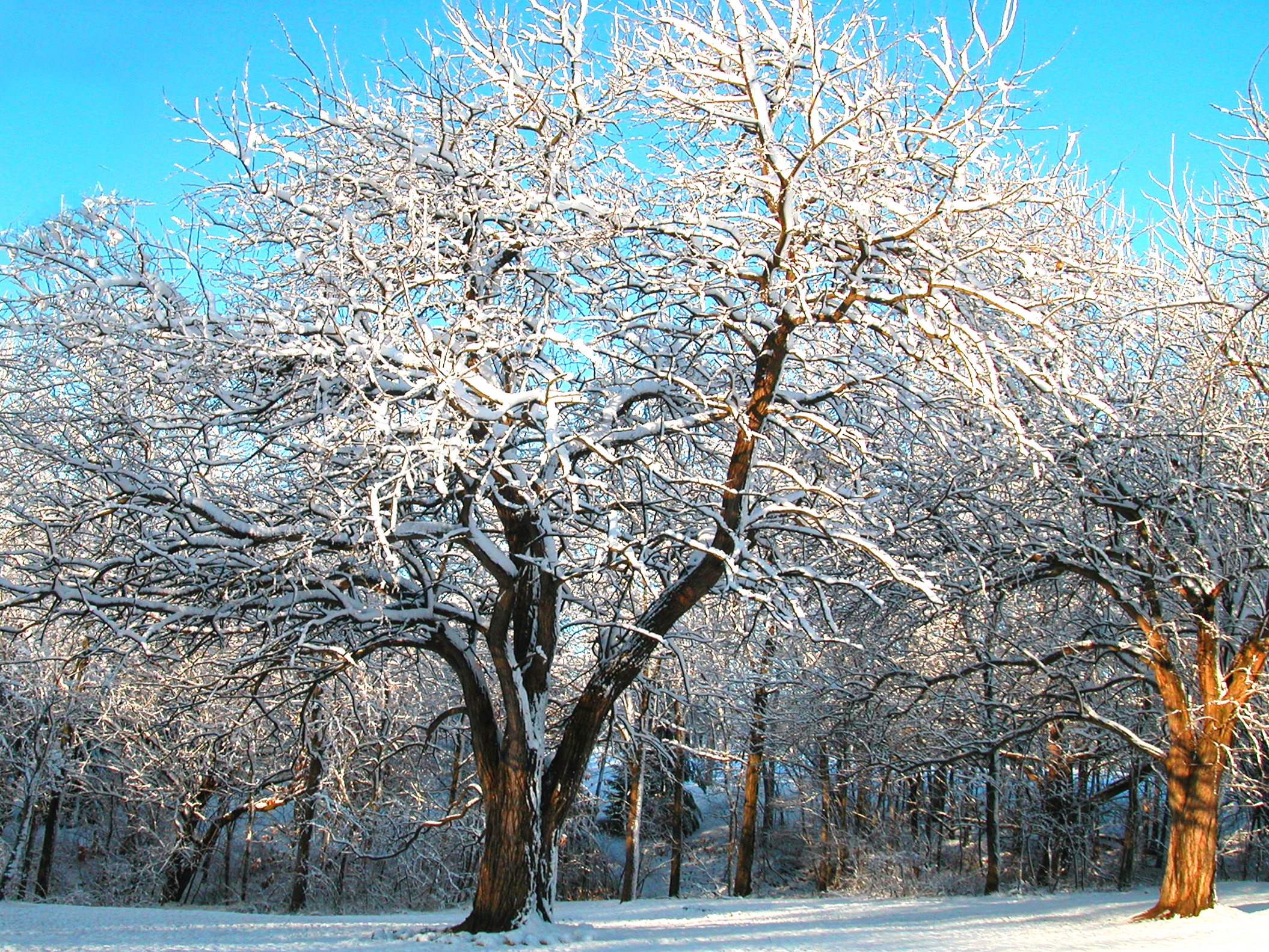 Winter at the Arboretum